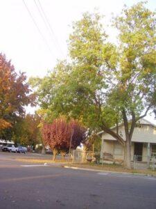 Reedley, CA